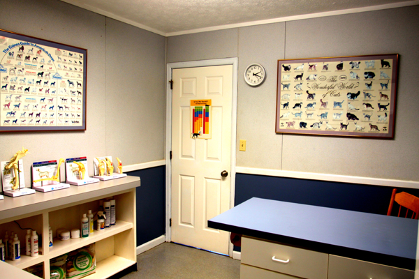 Examination Room at Blue Ridge Animal Hospital