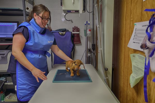 Puppy Examination at Blue Ridge Animal Hospital